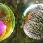 Faszination Seifenblase – Herrliche Bilder